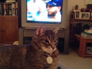 Hosmer the Cat (a.k.a. Hozzie) rightfully turns his back on Hosmer the first baseman (a.k.a. the enemy).